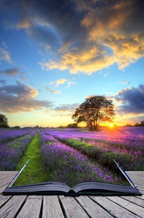 för fältbild för begrepp idérik solnedgång för lavendel arkivfoto