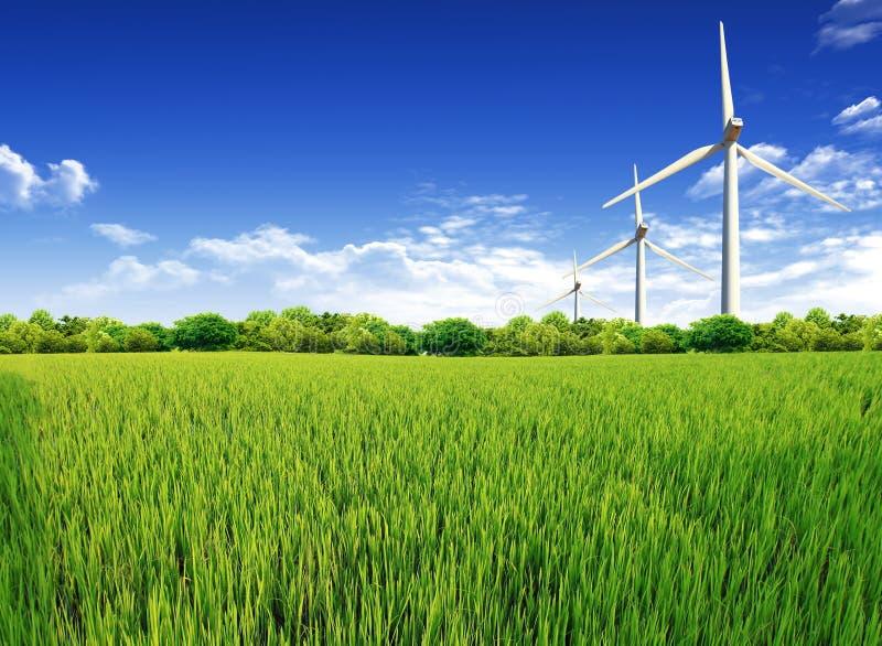 för fältgräs för bakgrund blå molnig sky för green royaltyfria bilder