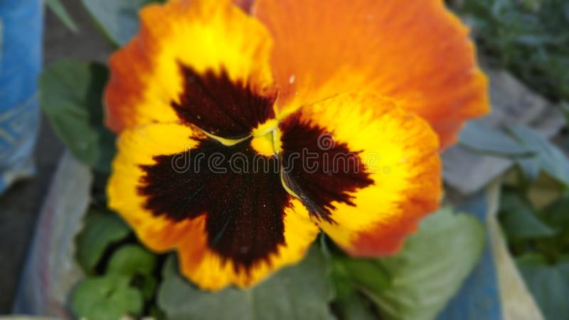 För färgfjäril för svart grön orange blandning åtskilliga blommor arkivfoto