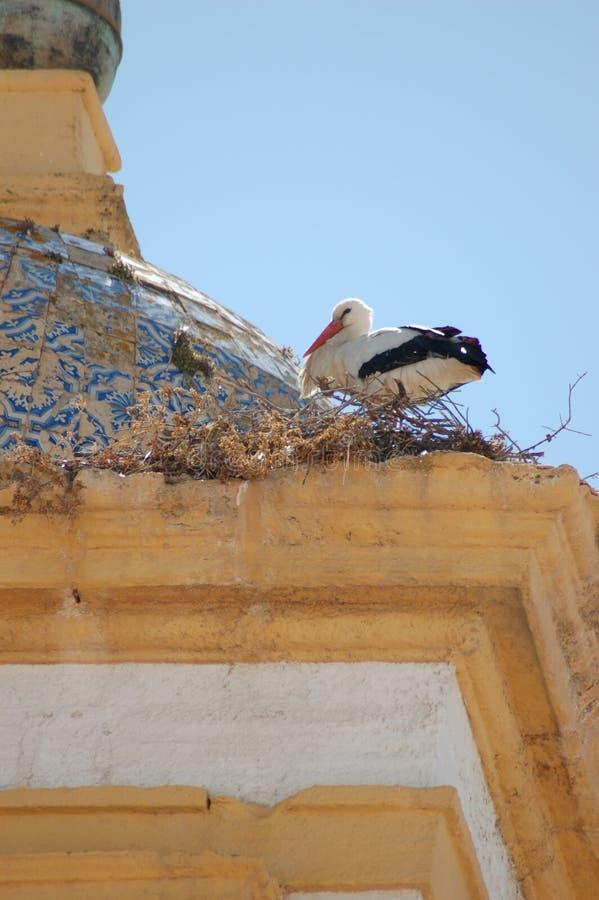 för fågel vägg uppför trappan arkivfoto
