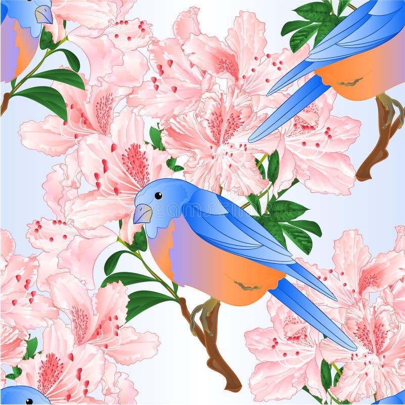 För fågelblåsångare för sömlös textur litet trast och ljus - redigerbar illustration för vektor för tappning för rosa färgrhodode stock illustrationer