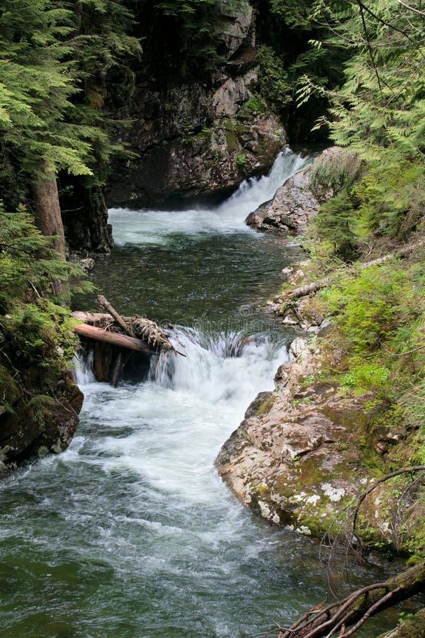 för fallsskog för liten vik denny franklin snoqualmie royaltyfri bild