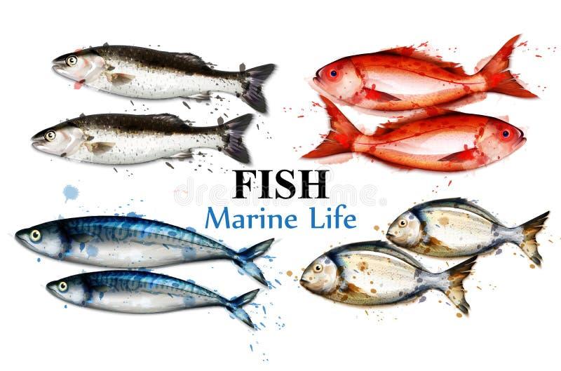 För fiskuppsättning för vattenfärg färgrik vektor för samling Isolerade detaljerade illustrationer för fisk vektor illustrationer