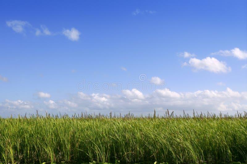 för florida för blåa everglades våtmarker för sky gröna plan royaltyfri fotografi