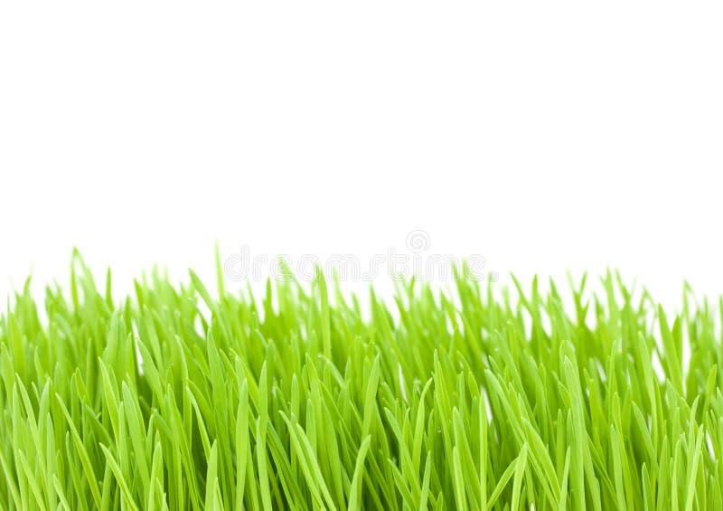 för formatgräs för 8 isolerade extra eps green v-vektorwhite arkivfoton