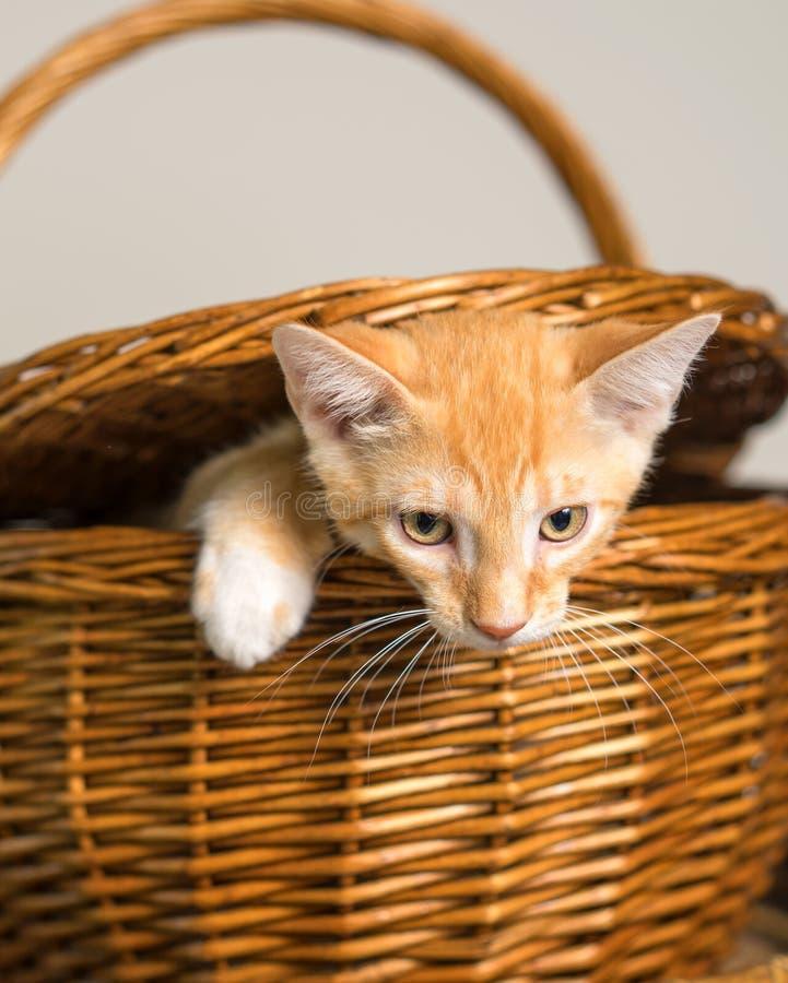 För formpicknick för orange kattunge flyende korg royaltyfri bild