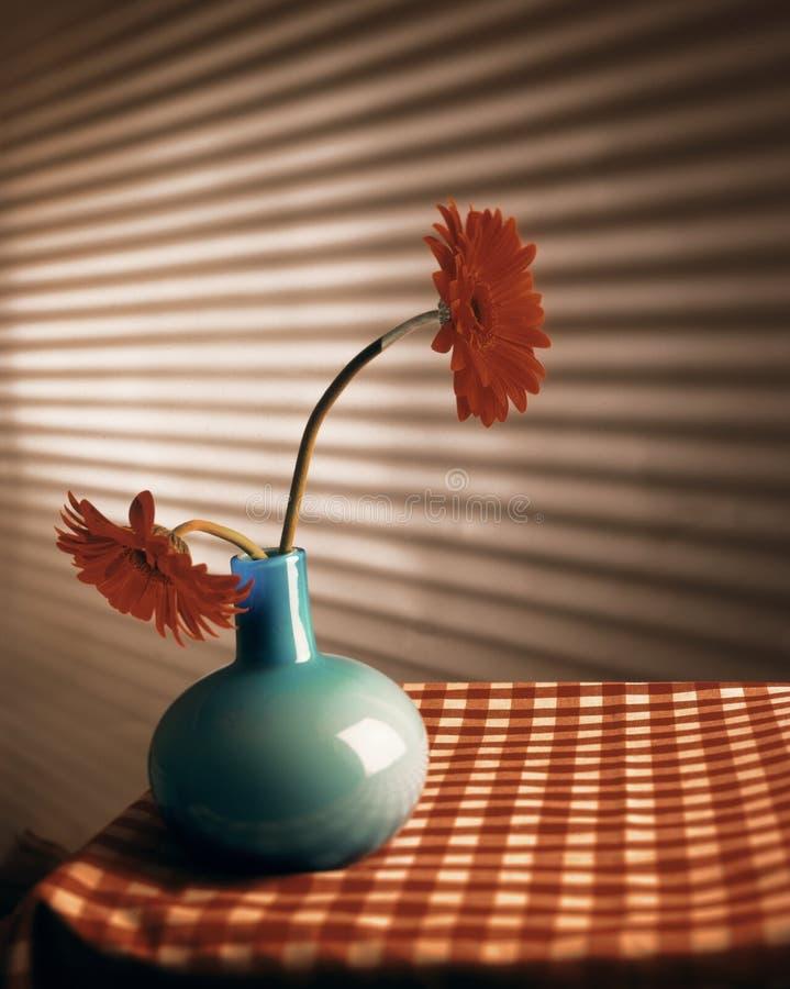 för gerberared för 2 blå blommor vase royaltyfri foto