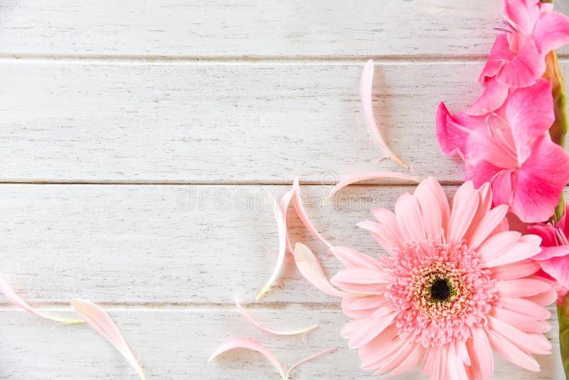 För gladiolusblomma för Gerbera dekorerar rosa sommar och kronbladet för vår på vit träbakgrund royaltyfri bild