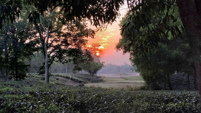 För gräsplanrisfält för blå himmel fältet ser grönt och grönt på fyra sidor, en bosatt bild, bilder royaltyfria foton
