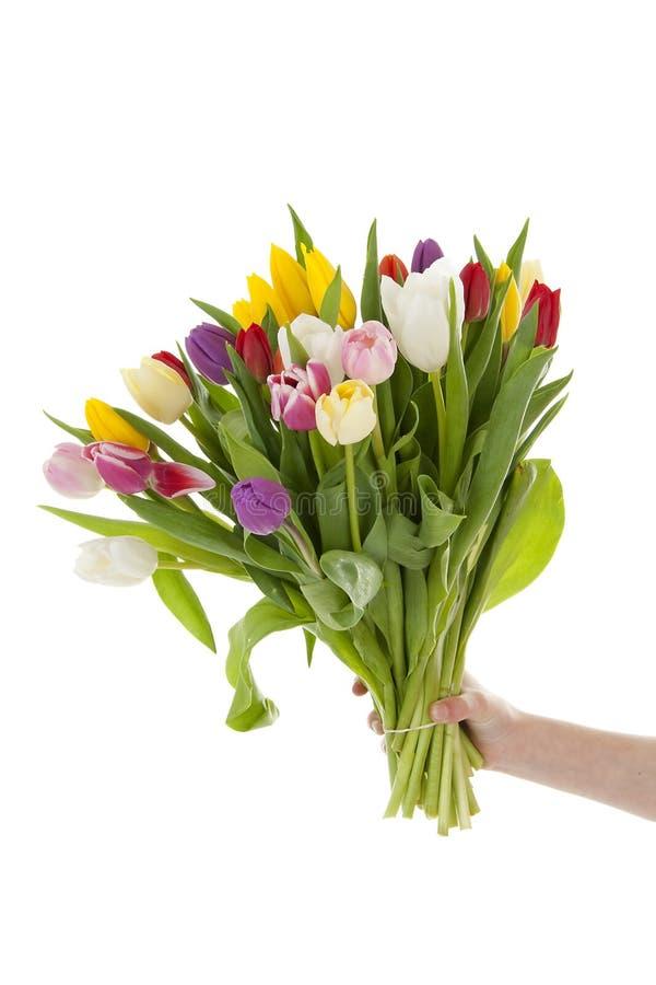 för handholding för bukett färgrika holländska tulpan royaltyfri foto