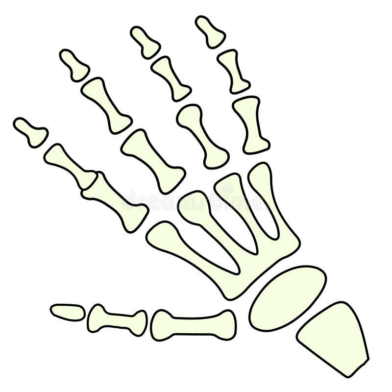 För handvisning för vektor skelett- ok för gest Isolerad illustration royaltyfri illustrationer