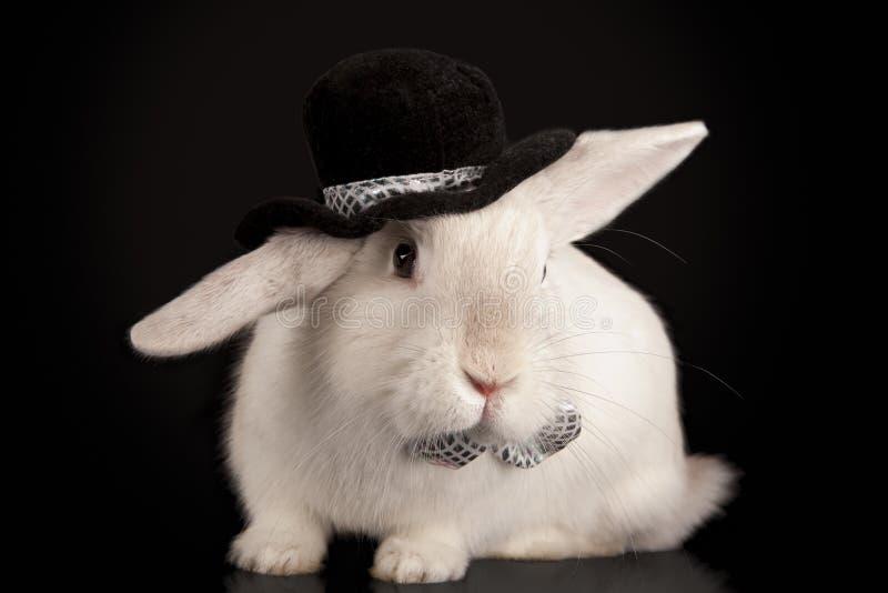 för hattkanin för bow gullig överkant för ti royaltyfria bilder