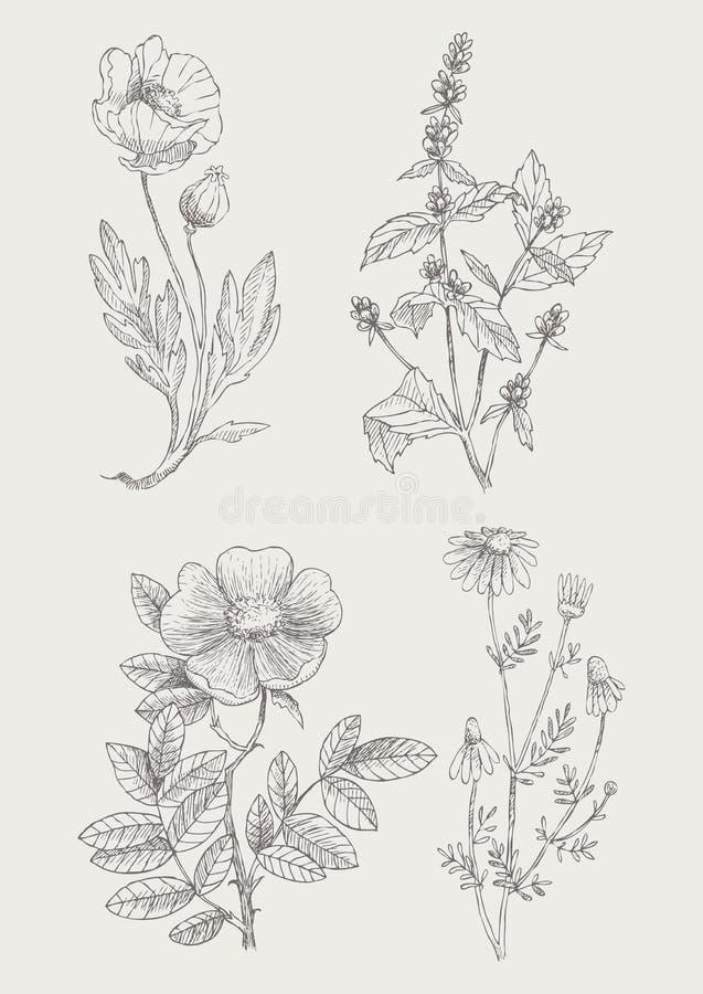 För illustrationblommor för tappning botanisk uppsättning vektor illustrationer
