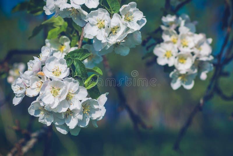 för illustrationtree för äpple härlig vektor royaltyfri fotografi