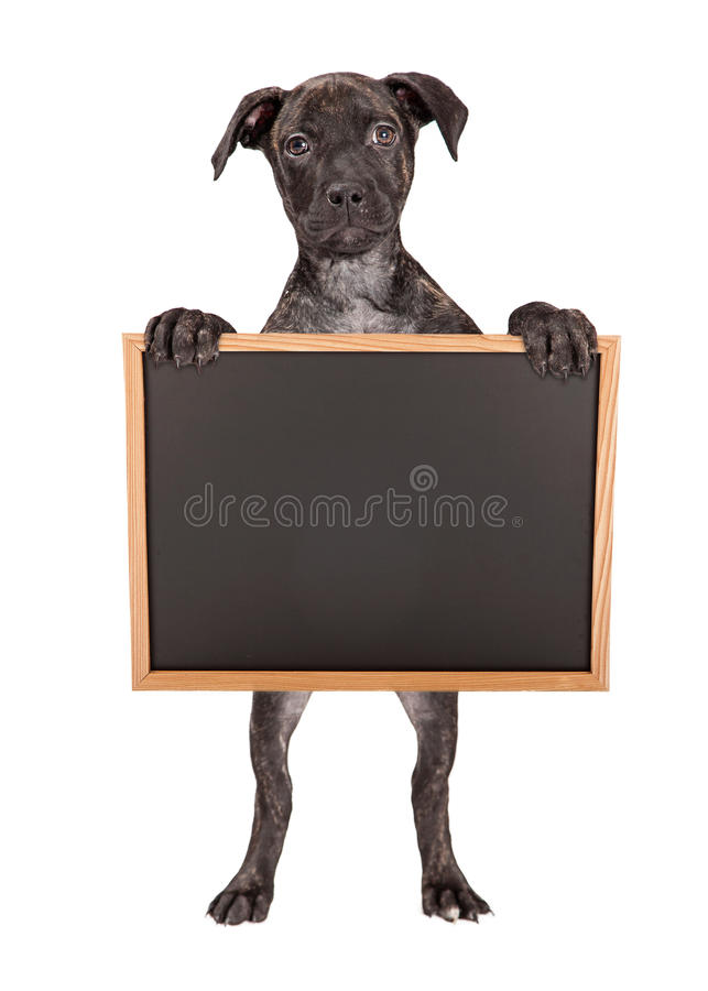 För innehavmellanrum för strimmig valp stående svart tavla royaltyfri fotografi