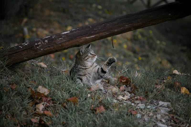 för kattclose för bakgrund svart stående för skog upp arkivbild