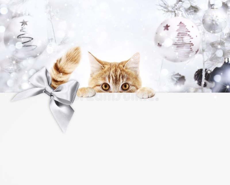 För kattgåva för jul ljust rödbrun kort med ljus bollar och silverribb arkivfoton