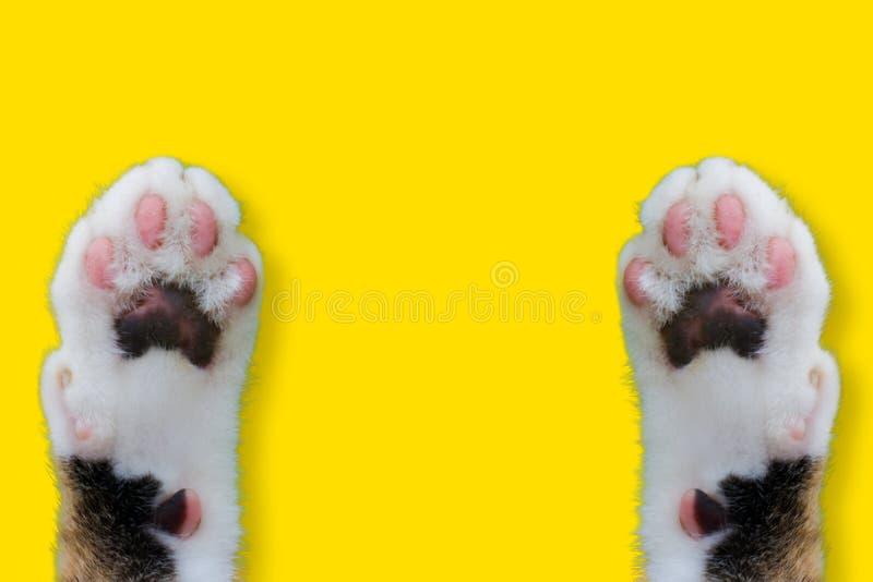För kattleende för händer thailändsk hatt för weat på gul isolerad bakgrund för djur bild arkivfoton