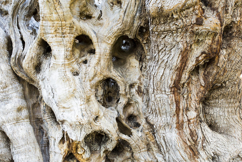 för kindtandnatt för el madrid tree för plats olive fotografering för bildbyråer