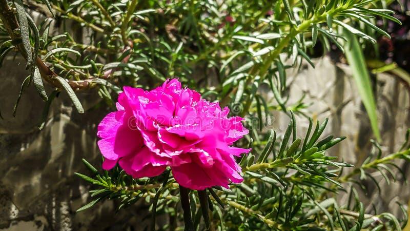 För `-klocka för nolla elva blomma royaltyfri fotografi