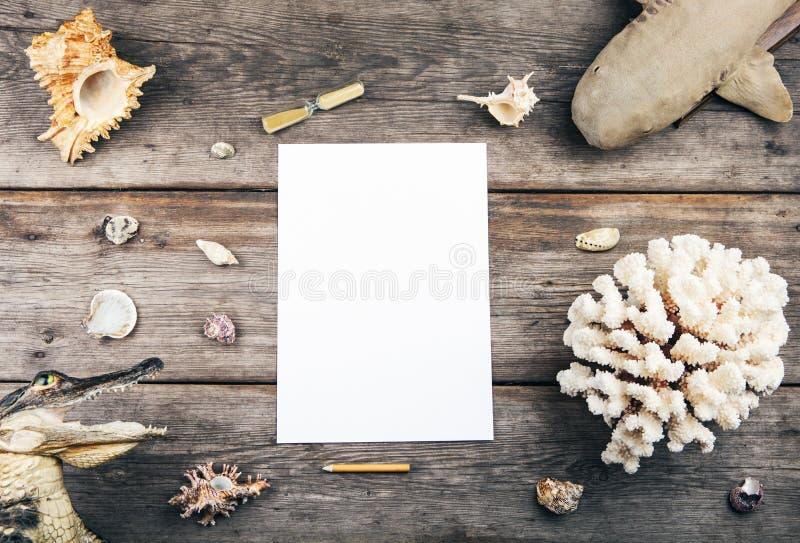 För klockatabell för snäckskal pappers- studio för haj för krokodil för blyertspenna royaltyfri foto
