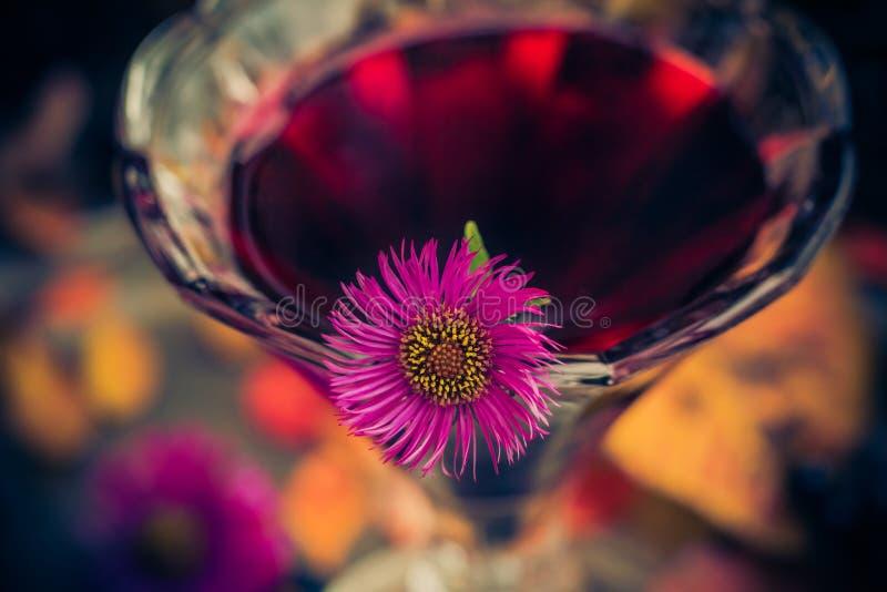 För kopptinktur för aromatisk alkohol chokeberry fotografering för bildbyråer