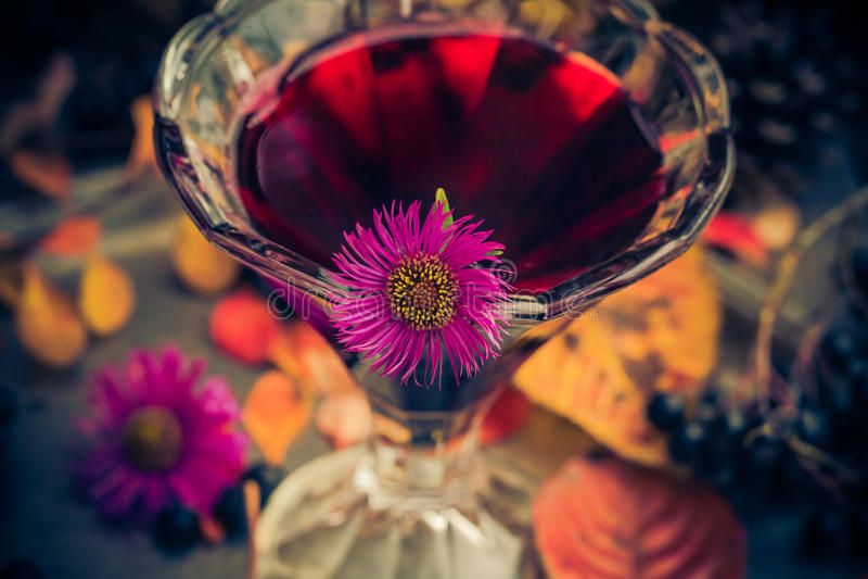 För kopptinktur för aromatisk alkohol chokeberry royaltyfri fotografi