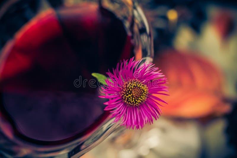 För kopptinktur för aromatisk alkohol chokeberry royaltyfri foto