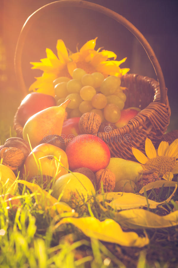 För korg för fruktgräs mycket ljus för solnedgång royaltyfria foton