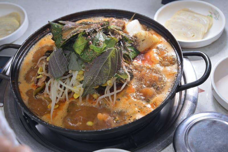 För krukagriskött för koreansk stil varma stöd royaltyfri bild