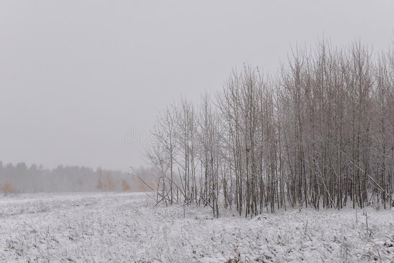 för ligganderussia för 33c januari ural vinter temperatur Minimalism i vinterlandskapet royaltyfri foto