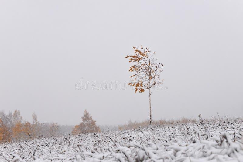 för ligganderussia för 33c januari ural vinter temperatur Minimalism i vinterlandskapet arkivbild