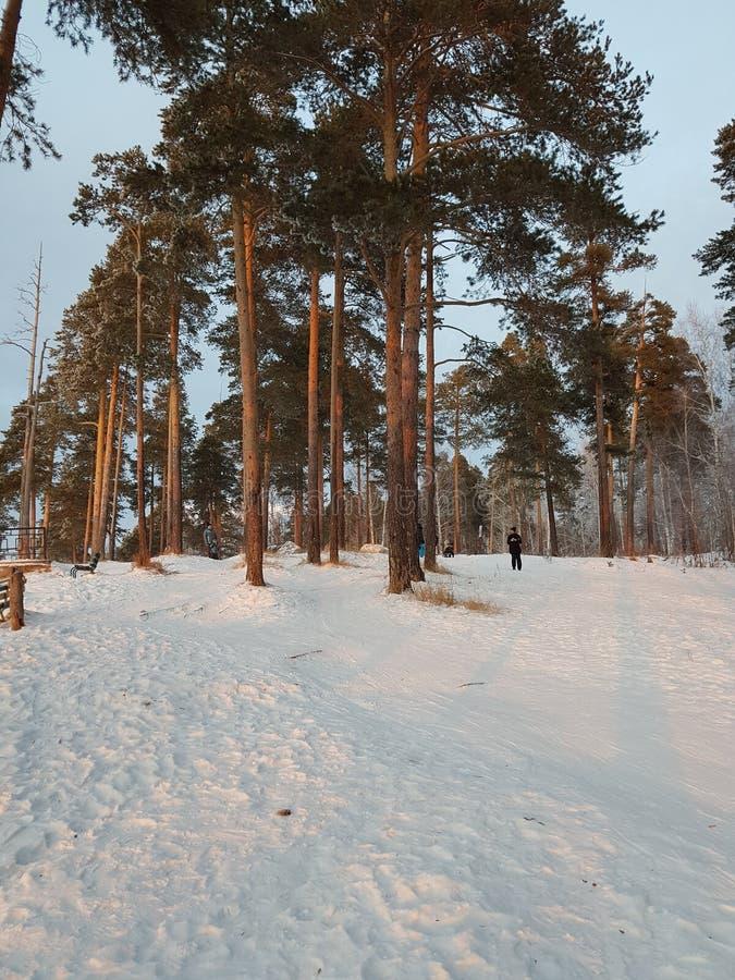 för ligganderussia för 33c januari ural vinter temperatur Skönheten av vinternaturen En kombination av vit fluffig snö för gräspl royaltyfri foto
