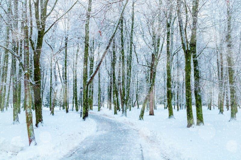 för ligganderussia för 33c januari ural vinter temperatur Snöig träd längs vintern parkerar, övervintrar den snöig naturen royaltyfri fotografi