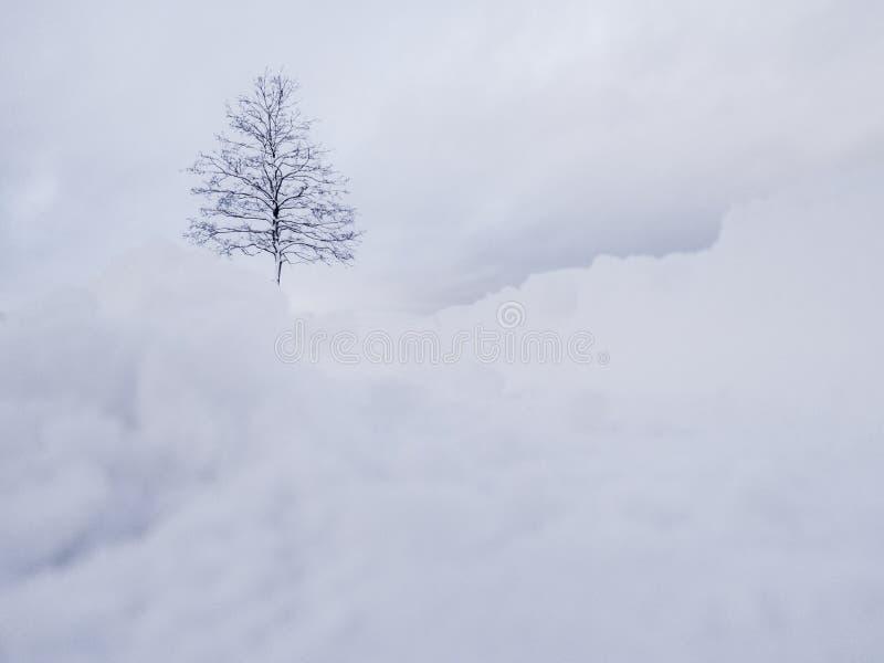 för ligganderussia för 33c januari ural vinter temperatur Vit snö ovanför träd Vinterpanoramalandskap med skogträd royaltyfri fotografi