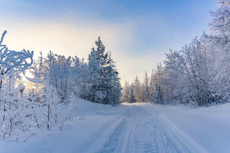 för ligganderussia för 33c januari ural vinter temperatur Yamalo-Nenets autonomt område royaltyfria foton