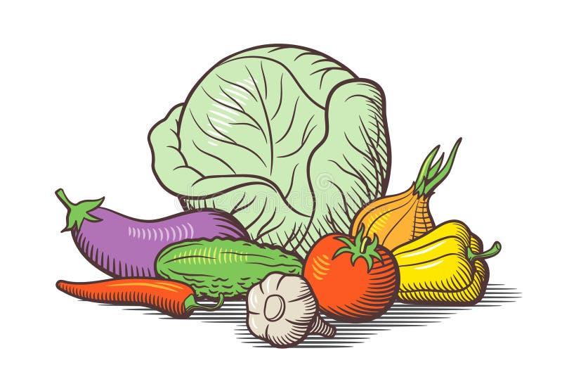 för livstid grönsaker fortfarande färg stock illustrationer