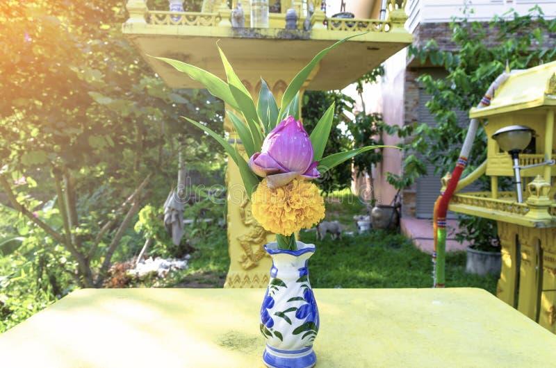 F?r lotusblommablomma f?r blomning rosa knopp och ringblomma med gr?n blad- och vattendroppe i vas royaltyfria bilder