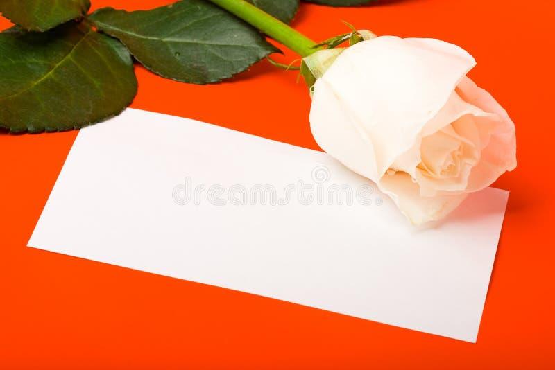 för makrored för blankt kort white för rose royaltyfria bilder
