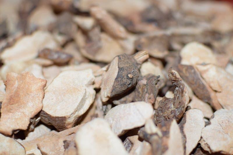 För materialSmilax för ört medicinska växter för detalj för glabra royaltyfri foto