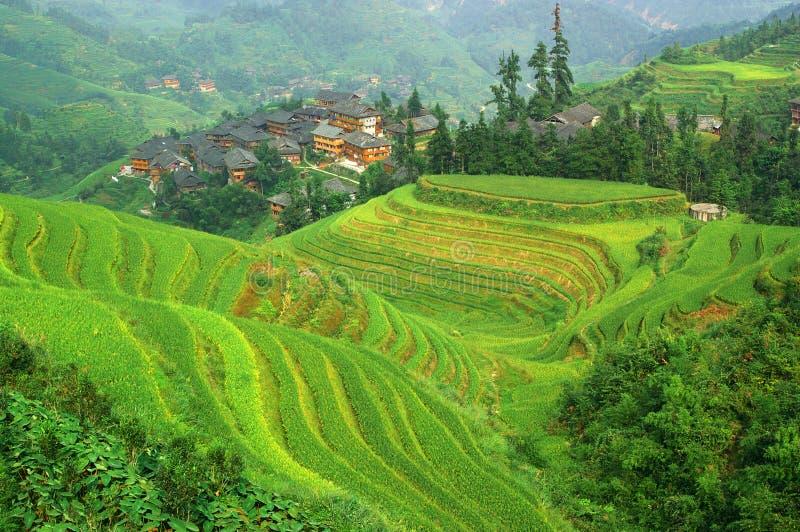 för mountainesrice för porslin grön terrass royaltyfria bilder