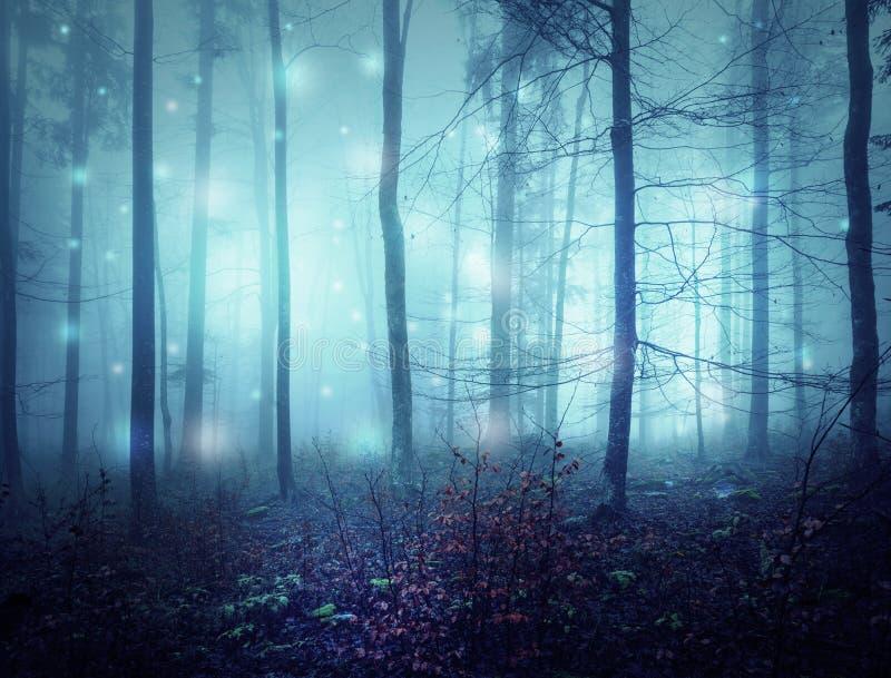 För mystikermorgon för höst dimmiga trän arkivfoto