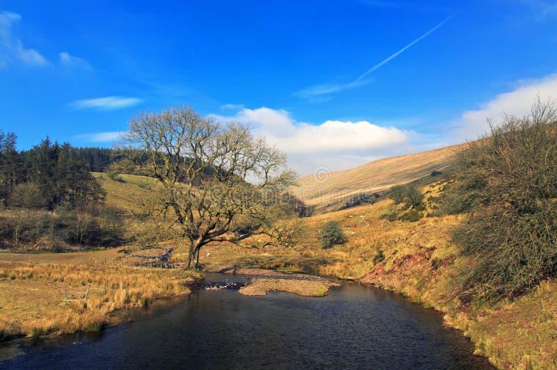 För Nant för Brecon fyrnationalpark flod besättning nära den Cantref behållaren arkivfoto