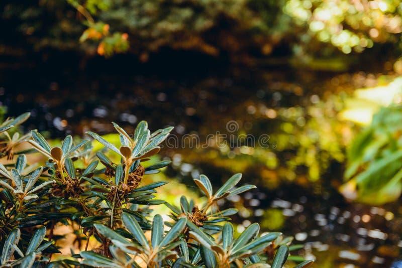 För naturgräsplan för nära övre detalj tropisk bakgrund för textur för blad, grönt blad i trädgården, grönt begrepp, tropisk skog royaltyfria bilder