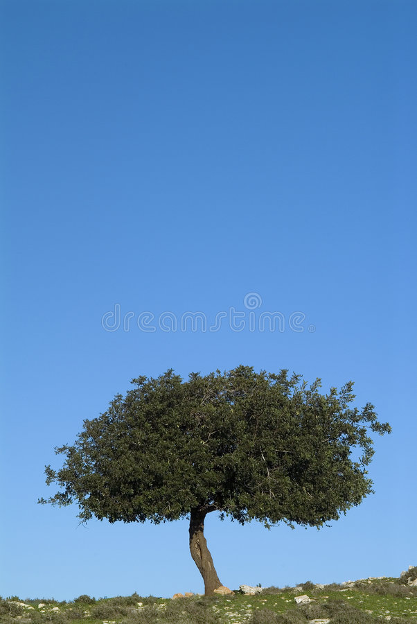 för oaksky för 2 blue tree arkivbild
