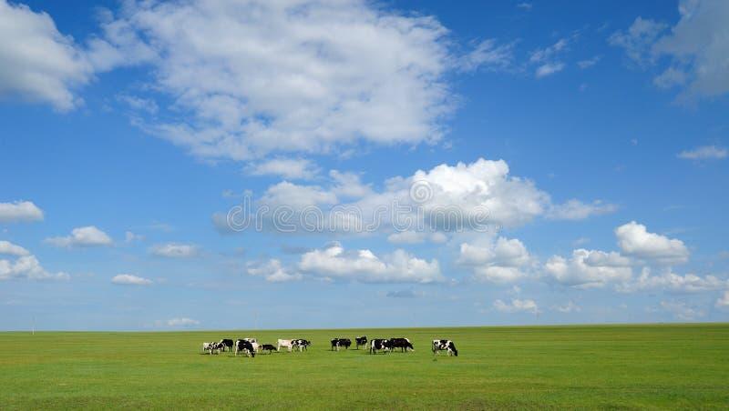 för oklarhetskor för bakgrund blå sky under white arkivfoto