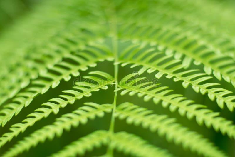 För ormbunkeblad för slut övre grön bakgrund för abstrakt begrepp för natur arkivbild