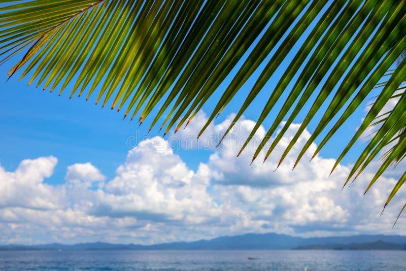 För palmblad- och turkosblått för Coco landskap för vatten för hav Grön palmbladram på ösikt Exotiskt ställe för semester arkivbild