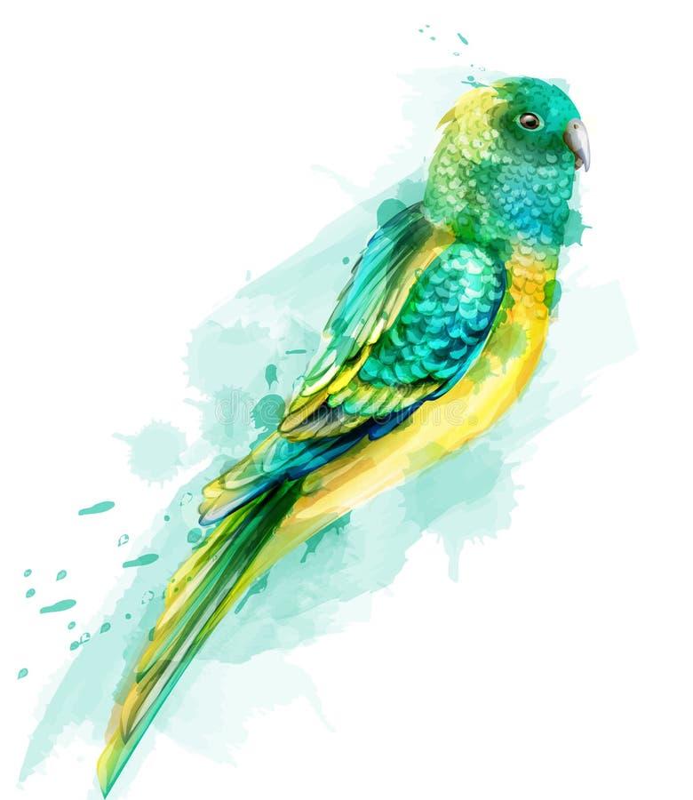 För papegojafågel för vändkrets färgrik vattenfärg för vektor Gullig fågelillustration blåa färgsplashs stock illustrationer