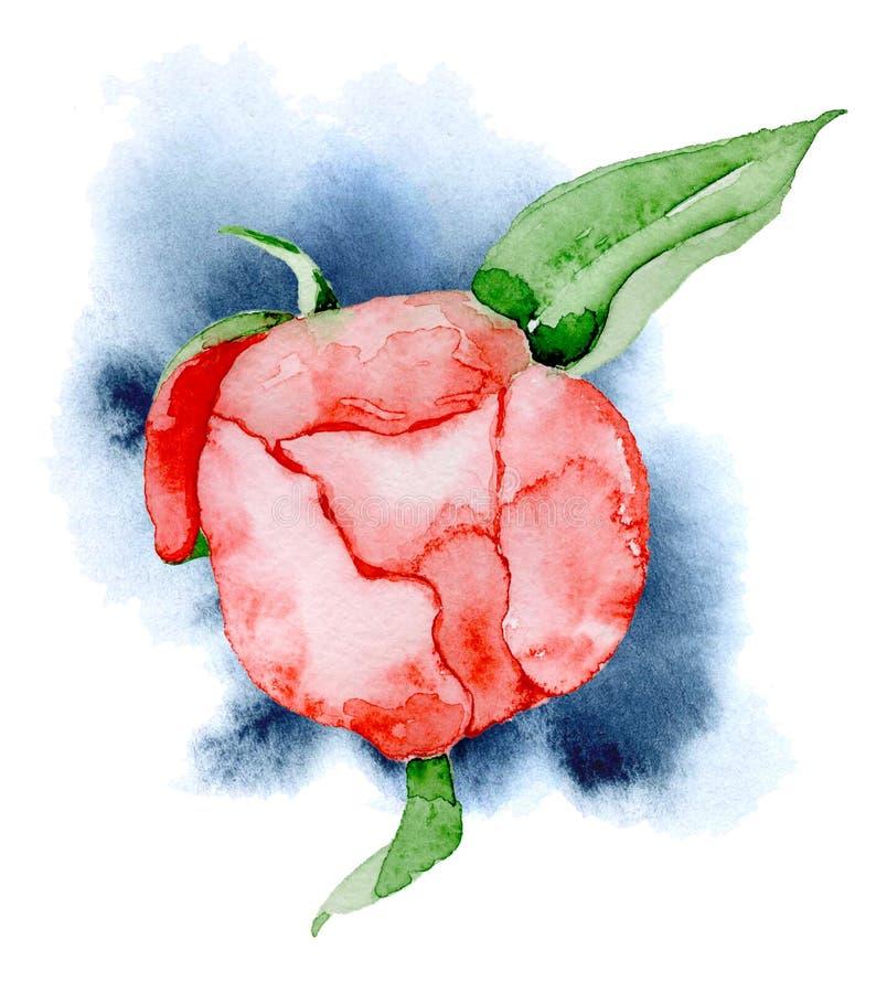 För pionblomma för vattenfärg röd dragen illustration hand stock illustrationer
